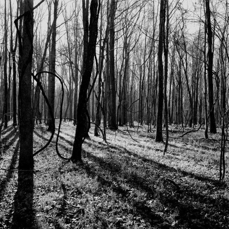 "Living Legend Nina Tisara Showcases ""Sanctuary"" Photo Collection"